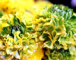 Les Jardins de Lise - Photos de bouquets - Photos